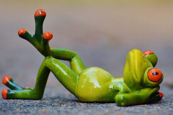 entspannter Frosch in Christels Scheune Hanau
