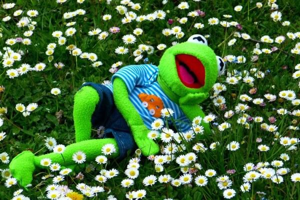 entspannter Frosch auf Wiese Coaching Hanau