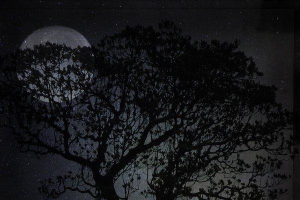 Mond hinter Baum zu Liederabend in Christels Scheune Hanau
