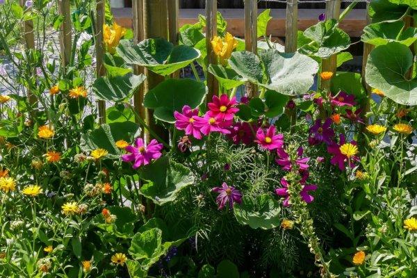 Blumen im Bauerngarten zum Blog Christels Scheune Coaching Hanau