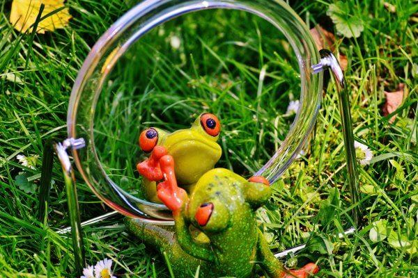 Spiegelbild Frosch für Blogbeitrag Christels Scheune Selbstbild Training Hanau