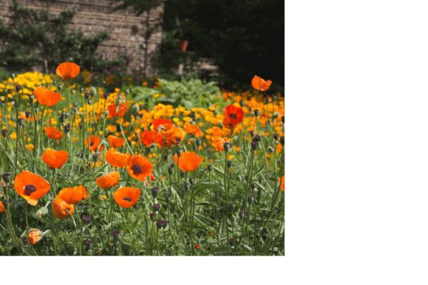 im Garten der Lieder Christels Scheune