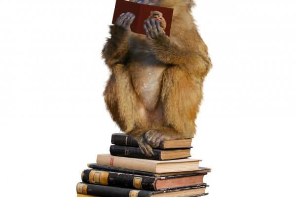 Affe auf Büchern Fortbildung für den inneren Kritiker Christel Veciana Hanau